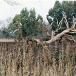 """[Corte cost. n. 171/2012] La Corte costituzionale ribadisce la """"trasversalità"""" della materia """"tutela ambientale"""" in tema di realizzazione di strutture edilizie in aree protette"""